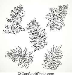 Fern leaves separately black and white graphics isolated on white background