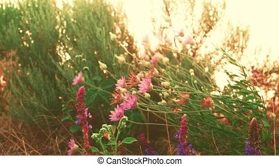 Steppe plants throbbled with the wind sunset warm color shot...