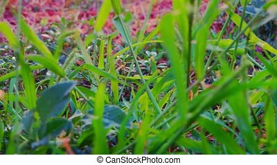 Green grass blades macro is fluttering in the wind.