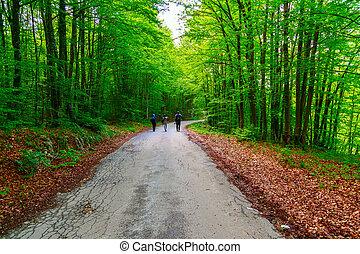 暗い, 森林, 道