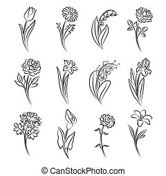 Collection of outlined flowers. Tulip, chamomile, lily of...