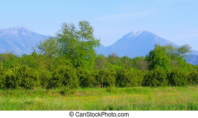 quot;Spring coming mediterranean green meadow forest, snowy...