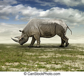 Rhinoceros extracted from its zoo environment