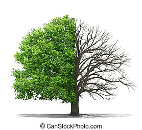 The concept of the dead and the living tree on a white...