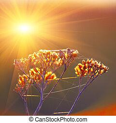 plantas, flores, secado, Plano de fondo, ocaso