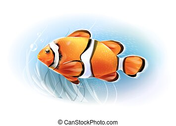 Beautiful clownfish in the sea Aquarium fish Underwater...