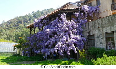 quot;lovely village house, walls full of floverquot; -...