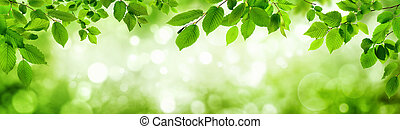 Green leaves and blurred highlights build a frame - Green...