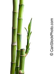 bamboo leaves isolated on white