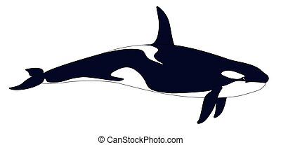 Killer whale Realistic grampus on a white background -...