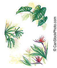 Tropical forest plant element water colour painting...