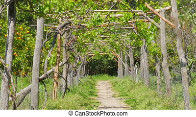"""Zoom out vineyard footpath, passing through path"""