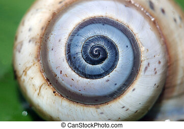 snail shell - background shot of snail shell showing a...