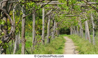 """vineyard footpath, passing through path"""