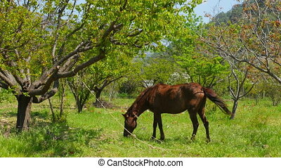 horse grazing at garden