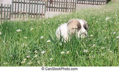 Puppy on a green field.