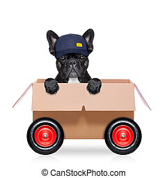 moving box dog - mail delivery french bulldog dog in a big...