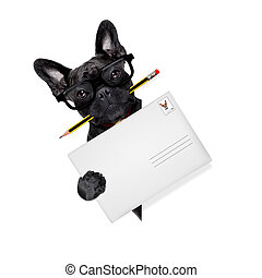 mail delivery post dog - mail delivery french bulldog dog ,...