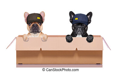 moving box couple of dogs - mail delivery couple or row of...