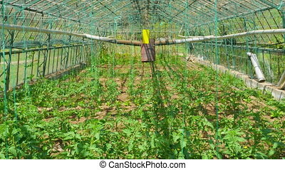 "Greenhouse garden, interior - ""Greenhouse garden, interior"""