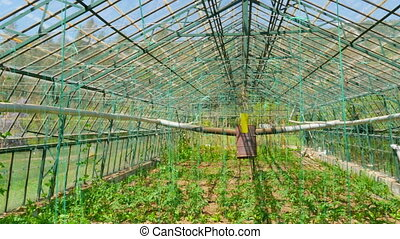 Greenhouse garden, interior - Greenhouse garden, interior
