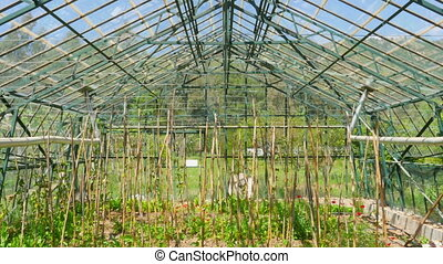 quot;Greenhouse garden, interiorquot; - Greenhouse garden,...