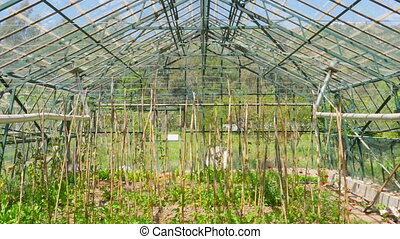 """Greenhouse garden, interior"""