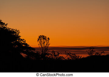 Orange sunset with trees silhouette