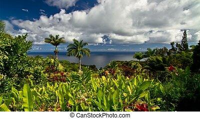 4K, Timelapse, kleingarten, von, Eden, maui, Hawaii, USA,