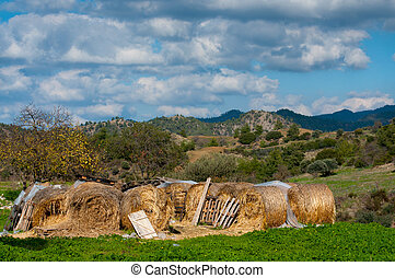 Haymaking time in Europe, many hay bales in the field