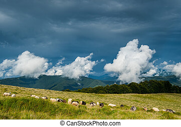 Sheep pasture in Carpathian mountains on dark contrasting...