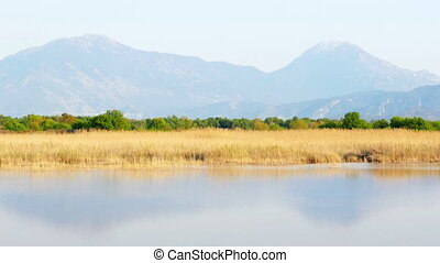 Reed bed by lake in nature