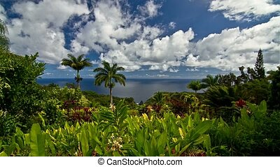 Timelapse, Garden Of Eden, Maui, Hawaii, USA - Shot in the...