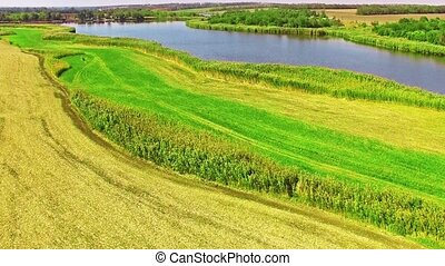 Rural, rustic landscape with river and wheat fields in...
