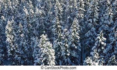 Aerial Forest In Snowfall