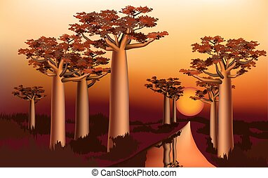 Sunset in the African baobab forest 1 - Sunset in the...