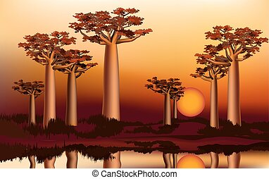 Sunset in the African baobab forest near the river 4 -...
