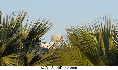 Satellite over palms. - Great satellite view over palms.