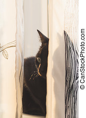 Black cat lying behind curtains