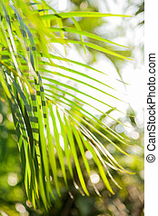 Natural background with palm tree leaves and sun reflection...