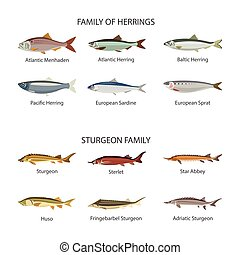 Fish vector set in flat style design Herrings and sturgeon...