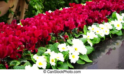 Various different flowers with vivid colours in bright...