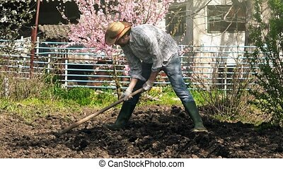 Man hoeing vegetable garden soil on organic farm, preparing...