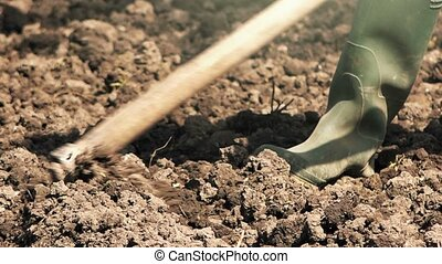 Man hoeing vegetable garden soil, new growth season on...