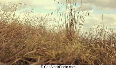 landscape dry grass sways in wind movement nature -...