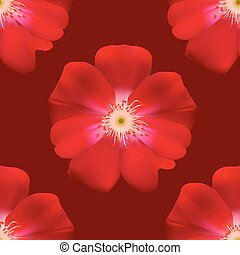 Red Primula - Seamless floral background isolated of Red...