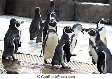 cute penguin in the zoo