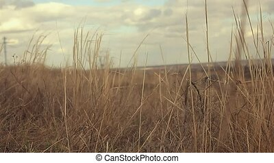 landscape dry grass sways in wind nature movement -...