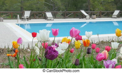 Swimming pool  with tulips