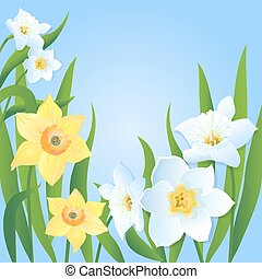 Postcard with Yellow and White Daffodils